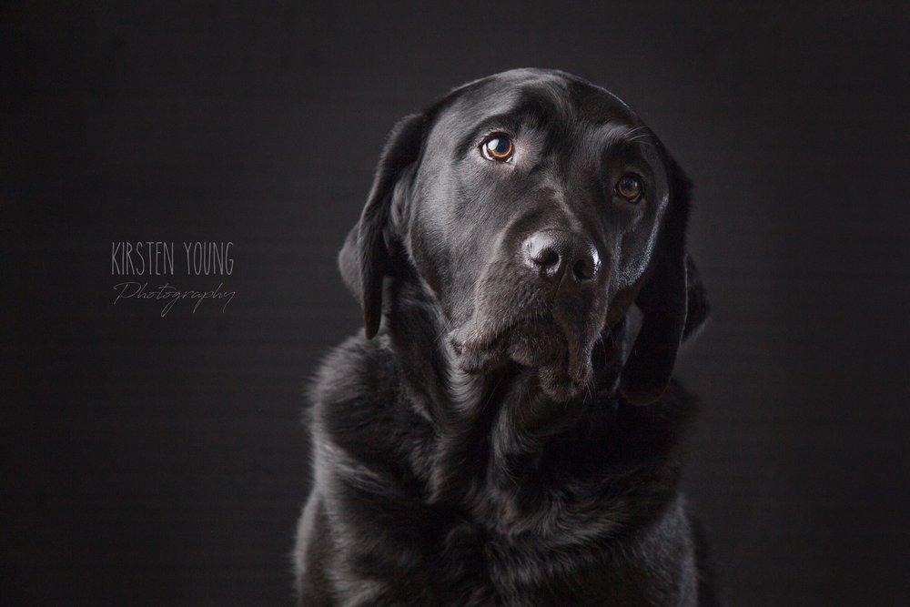 Puppy dog eyes-logo.jpg