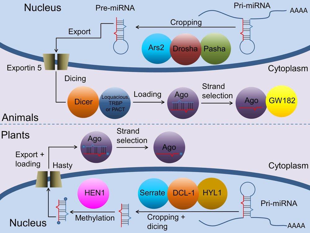 Moran et al Figure 1.jpg