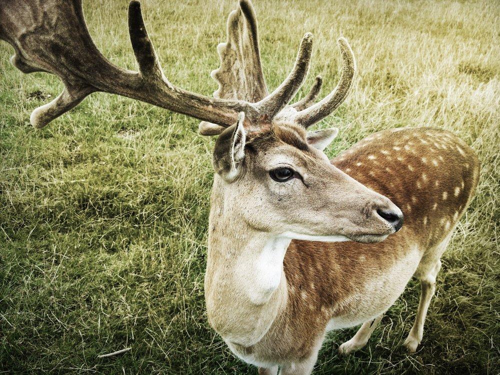 Mindfulness for Mammals, Gut Instinct Wellness