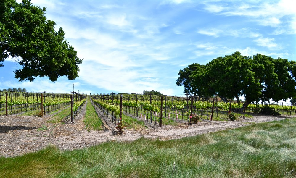 Cebada Vineyard