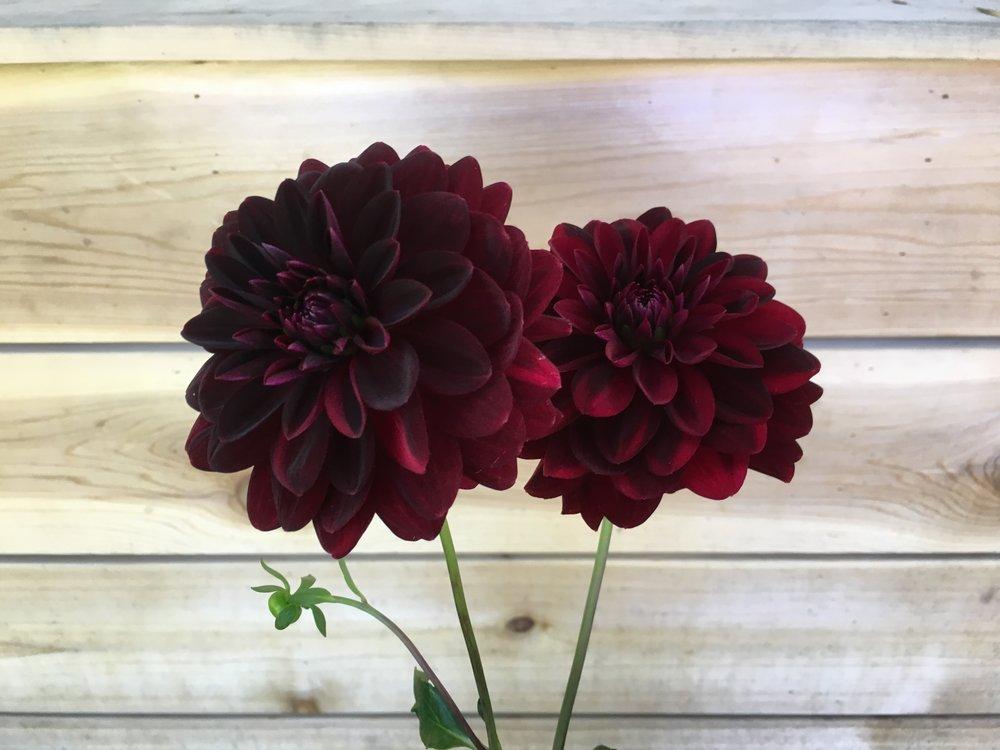 Arabian Night - Dark burgundy red,4-5