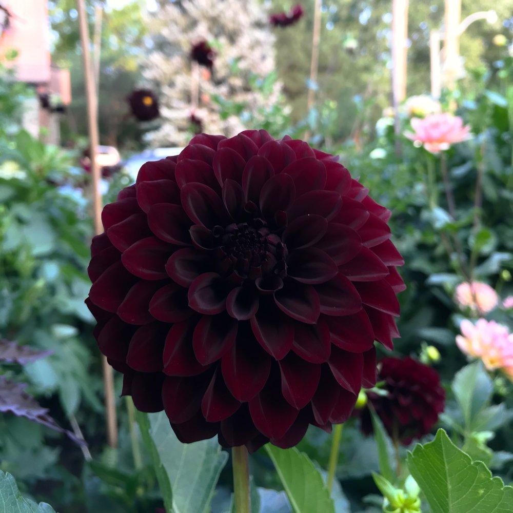 Black Satin - Beautiful dark burgundy with smaller 4