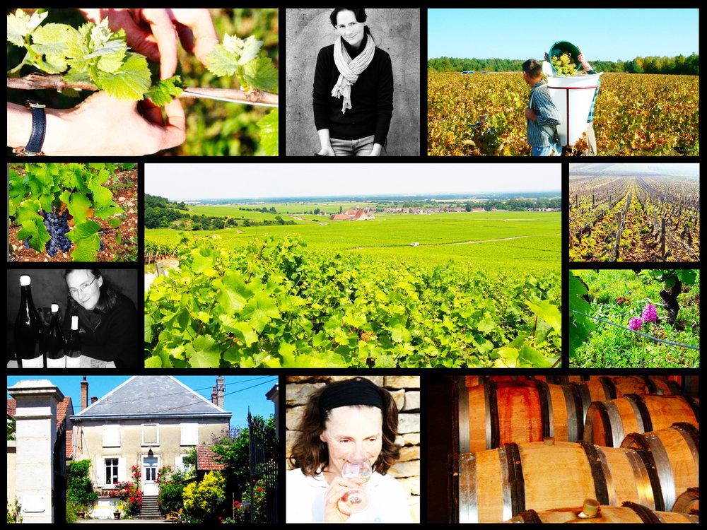 Dégustation Domaine Naudin-Ferrand (Magny-Lès-Villers) - le 27 avril 2017 - avec Claire NAUDIN