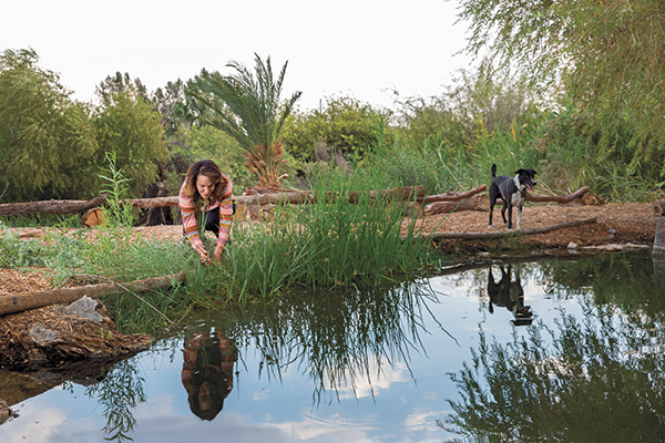 Sorrells (with her dog, Willie) pulls nonnative plants from a restored pond, a habitat for some 5,000 pupfish, once thought extinct. Another restoration effort is underway to bring back the endangered Amargosa vole.  Photographs by Jessica Scranton.