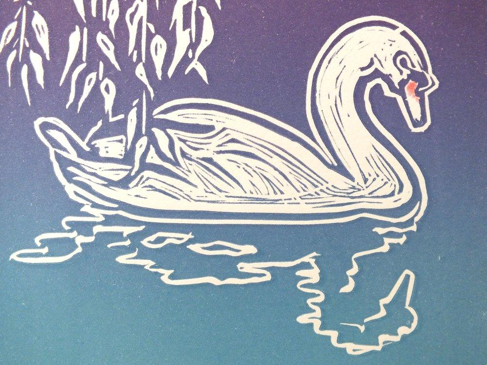 Swan meddly.jpg