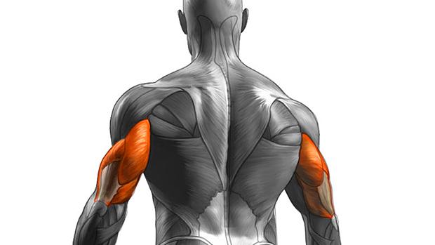 triceps.jpg