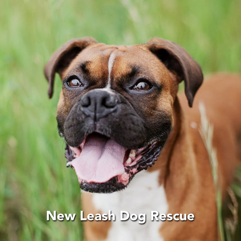 NEW LEASH DOG RESCUE