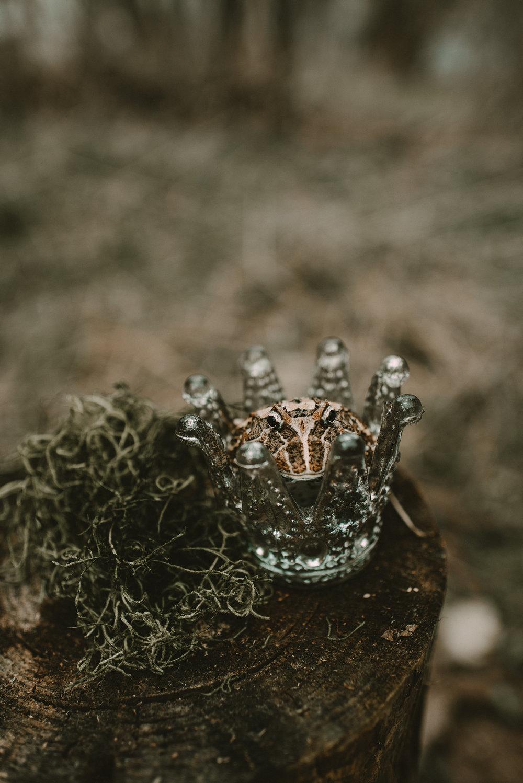 141_princess_frog_4556.jpg