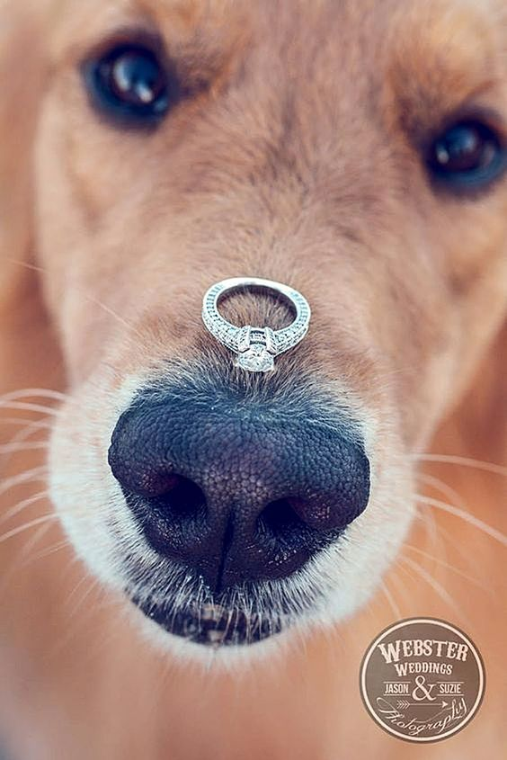 Puppy Love - http://www.weddingforward.com/gorgeous-engagement-rings/