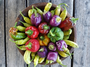 Sweet Peppers are loaded with various vitamins and minerals and exceptionally rich in Vitamin C and contain many healthy antioxidants