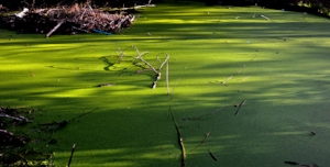 Eutrophication (pictured above)