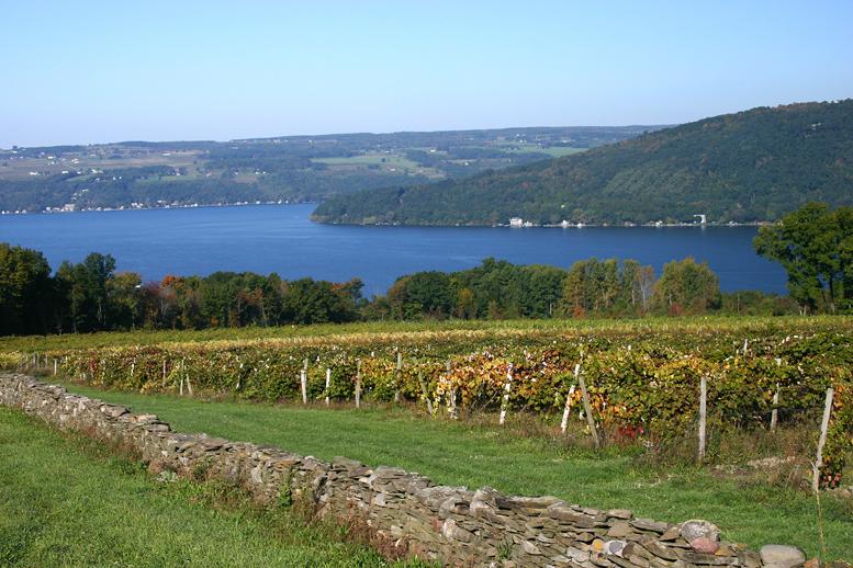 Vineyards on Seneca Lake