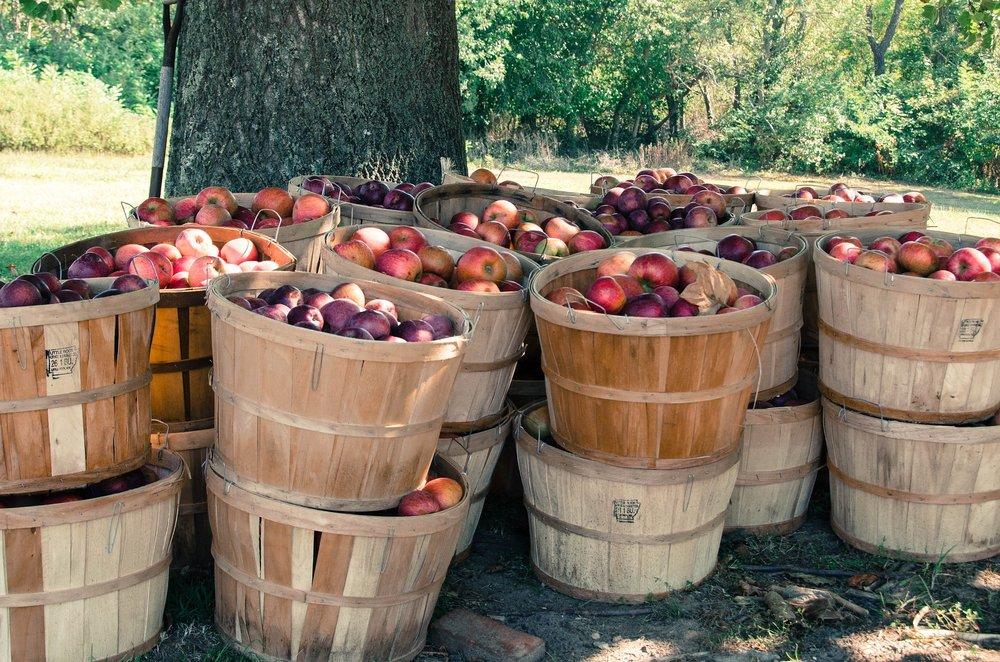 apple bushels.jpg