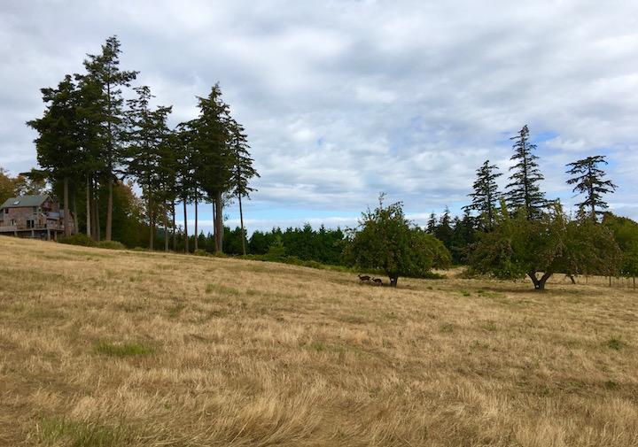 lummi field.jpg