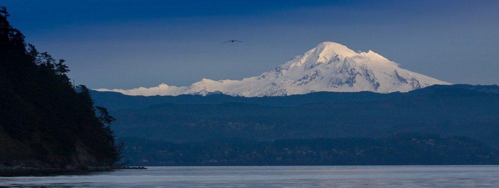 Optimized-Mt. Baker with bird.jpg