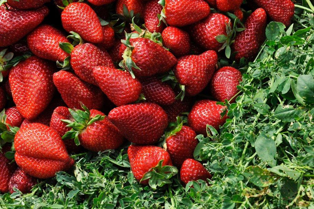 Optimized-strawberries.jpg