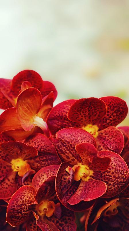 optimized red flowers.jpg
