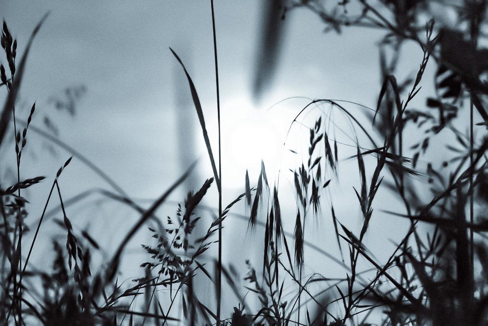 L'herbe et la lune 1 -Sophie Milchberg