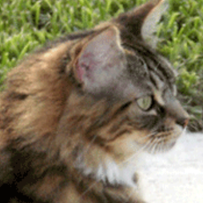 Gigi and Cindy- aggressive stalking cat, veterinary behaviorist house call