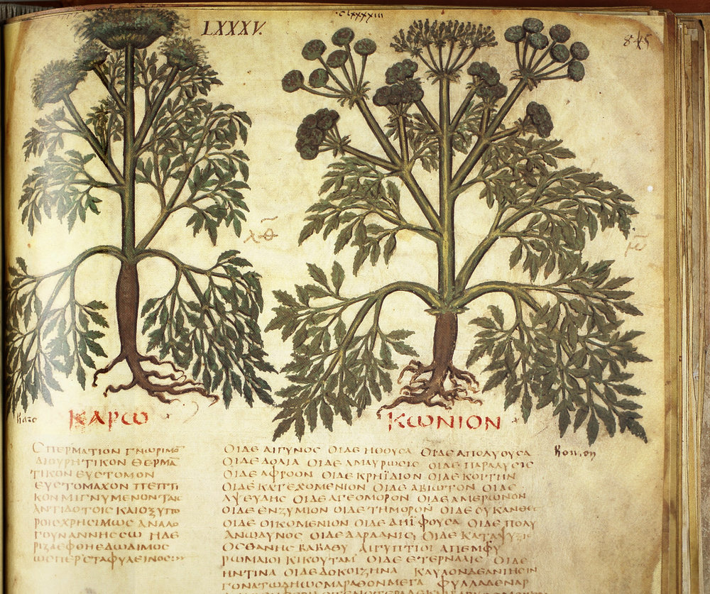 70 AD - Dioscorides - medical doctor to Roman Emperor Nero lists Hemp extract in his famous medical text which went on to be used for over 1000 years.