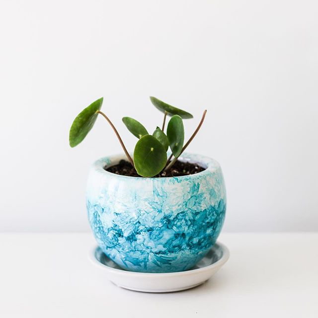 Painted up a little pot for my new friend Pippa the Pilea... how cute is she! #pilea #pileapeperomioides #alcoholink #alcoholinkart #fluidart #alcoholinks #pilealovers #pileababy #belindadoyleart #urbanjungle #plants #alcoholinkartist #sydneyartists #homedecor #australianmade #australianartist #australianart #plantsofinstagram #houseplants #plantsmakepeoplehappy #sydneyart #ladystartup #handmade #houseplantclub #indoorplants #crazyplantlady #southcoastnsw #kiama #kiamansw