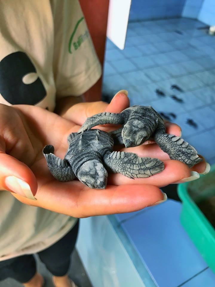 Caring For Baby Turtles