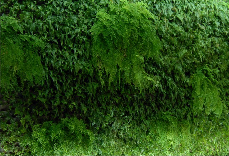 Muro verde -