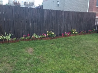 Nicole's Flower Bed