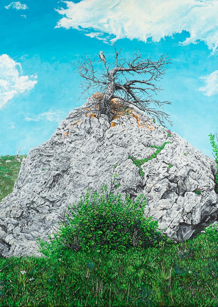 Clark's Nutcracker Perched Upon A Limber Pine