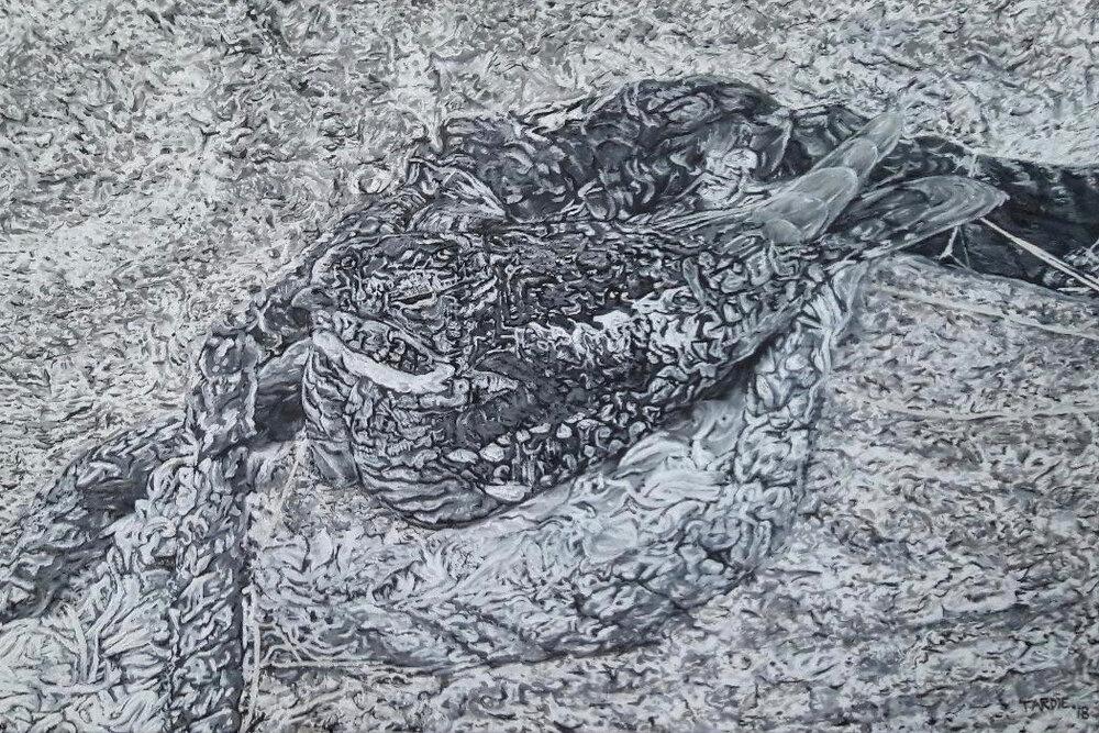 Nighthawk Nesting on Tarmac