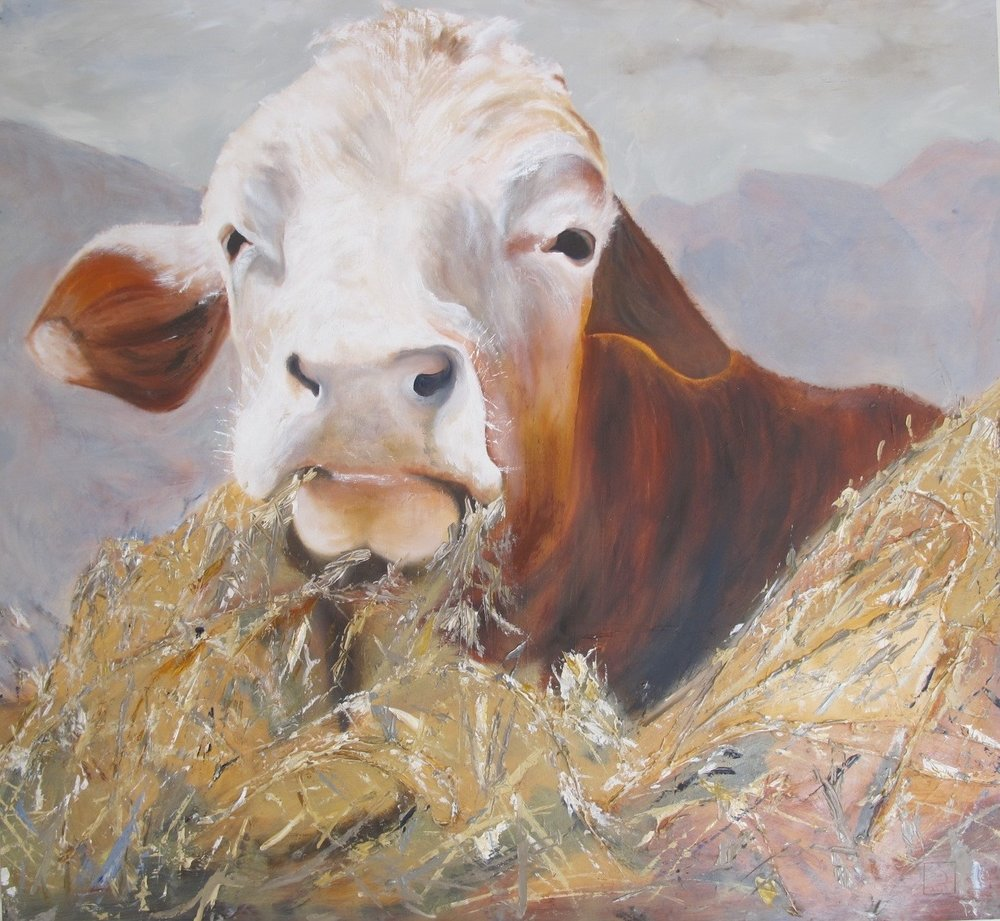 Heifer - 99 X 92 cm oil on canvas