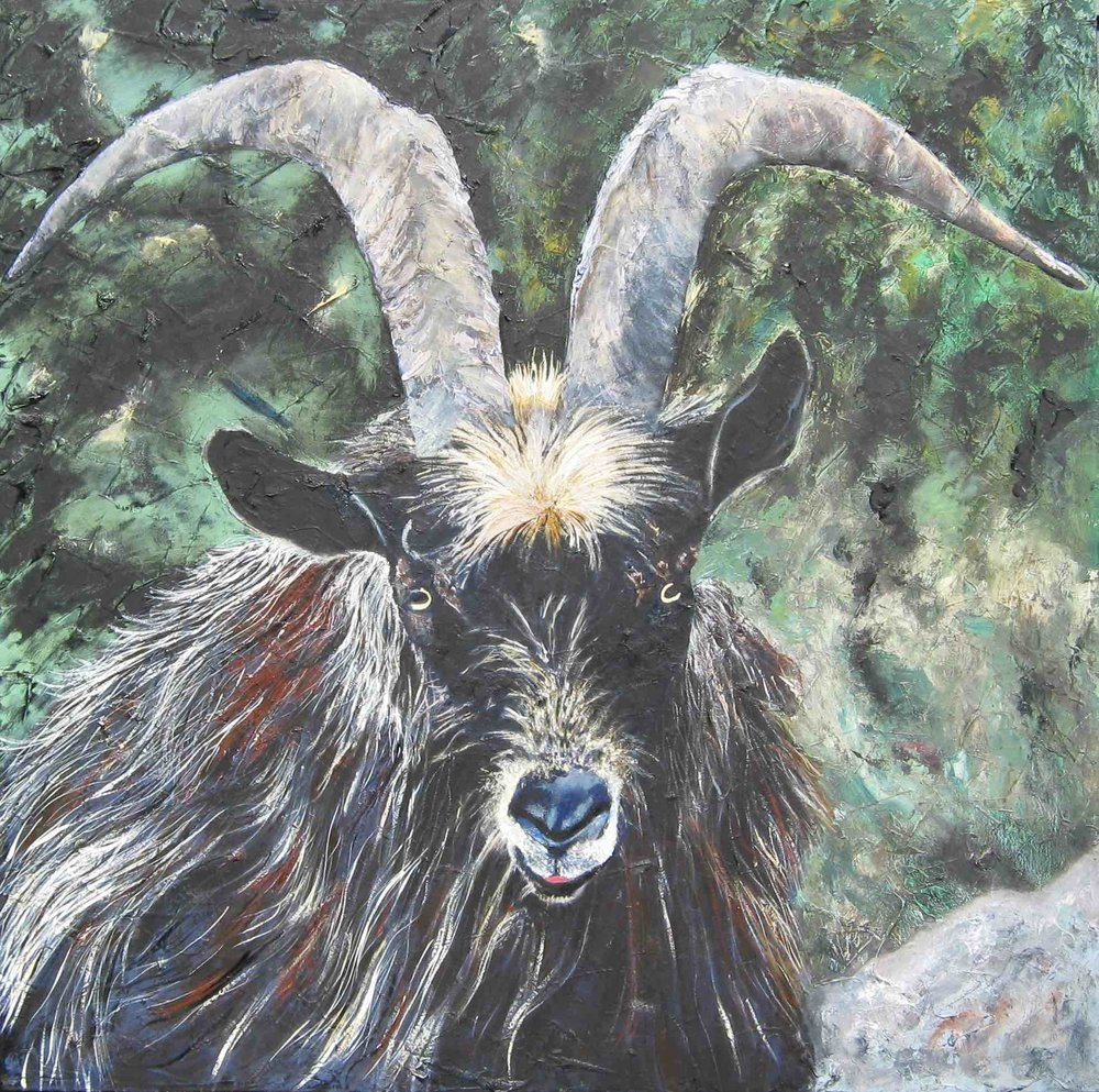 Feral Goat : 92 X 92 cm oil on canvas