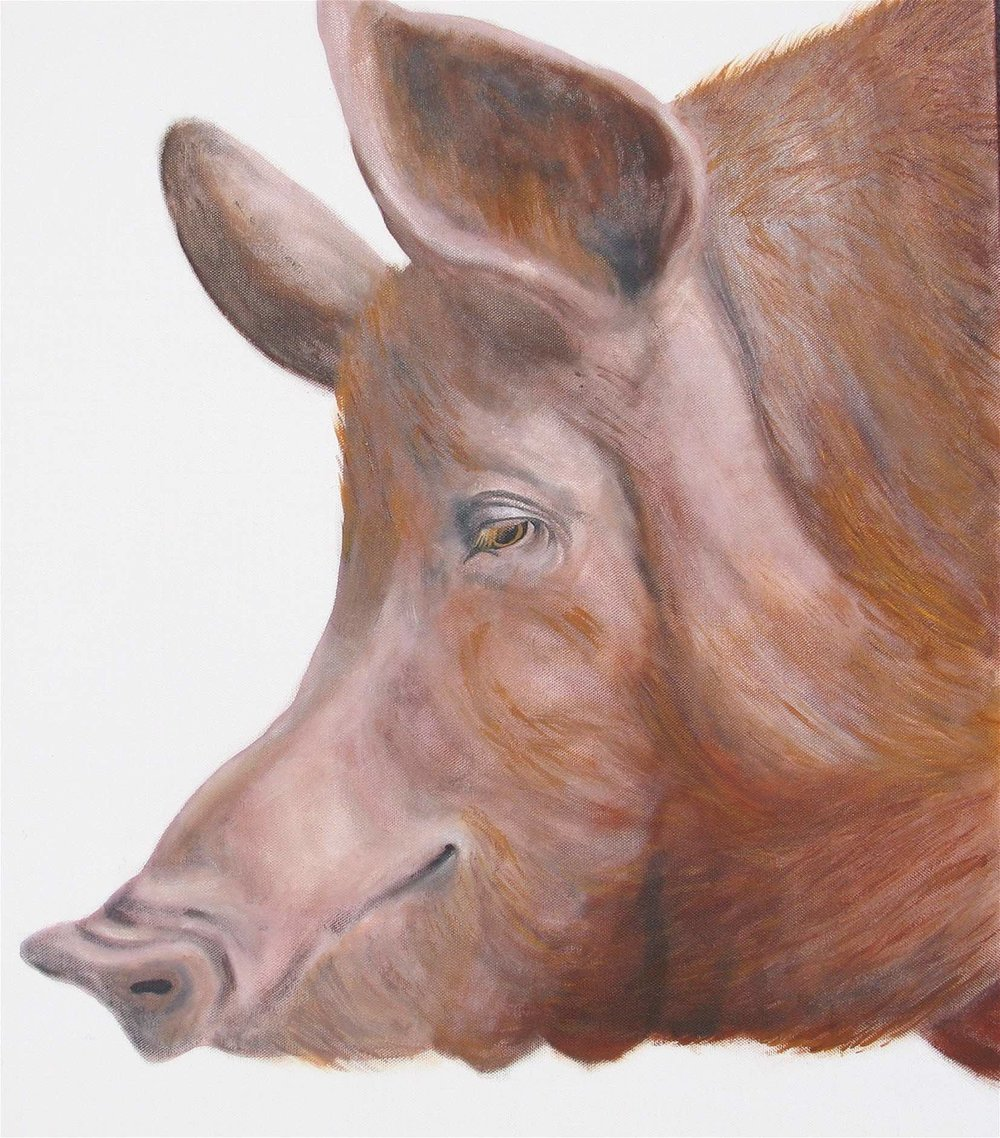 Pig : 80 X 80 cm oil on canvas