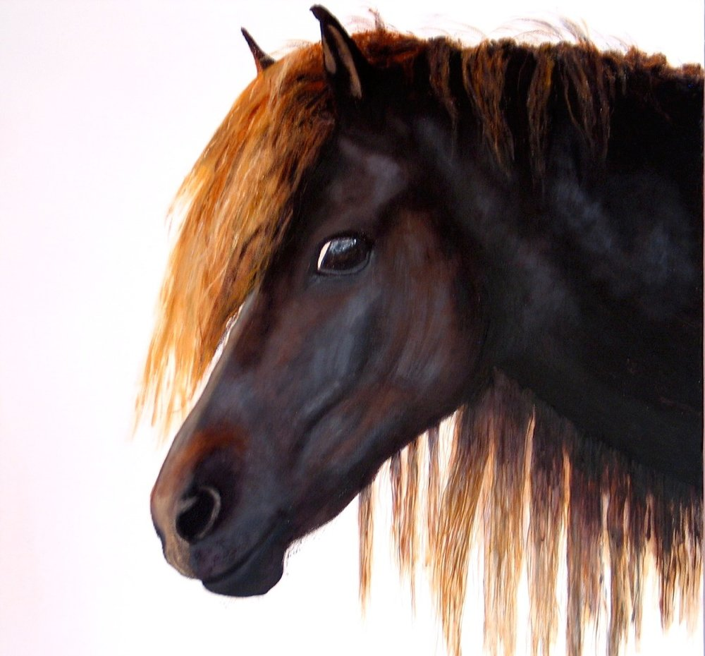 Icelandic Pony : 50 X 50 acrylic on canvas