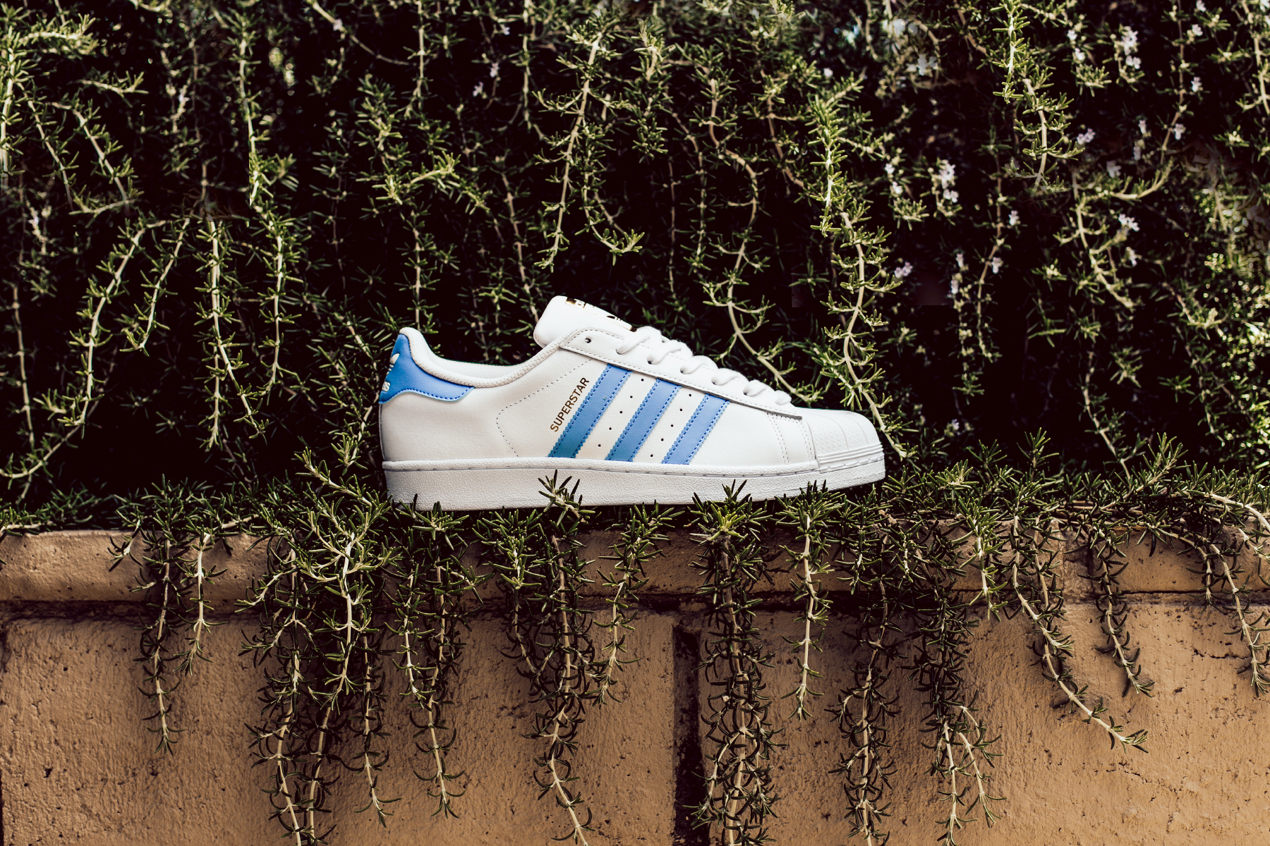 adidas superstar baby blue stripes