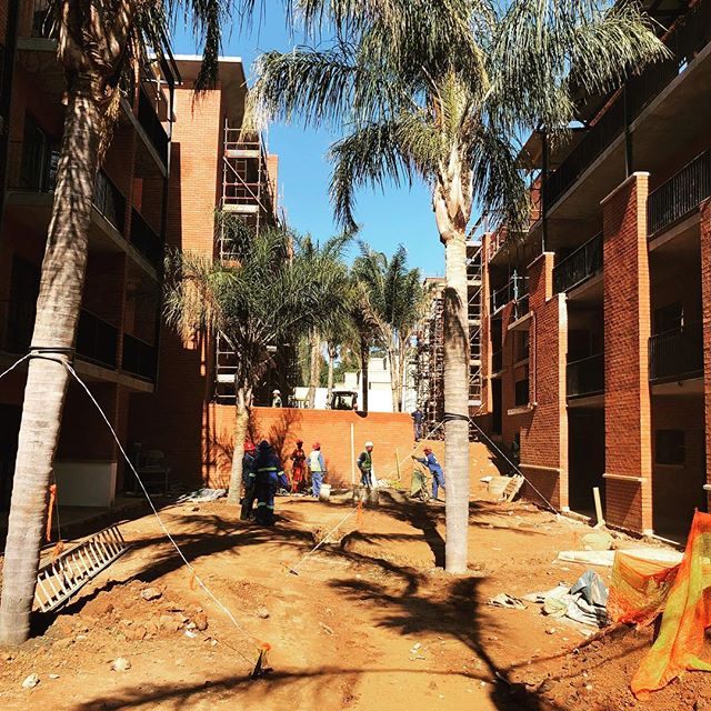 Nothing says 'New York Style Lofts' more than palm trees :) Final pieces coming together nicely at The Fitzgerald opposite Melrose Arch. If you missed out on phase 1 don't worry, phase 2 is coming soon. #TheFitzgerald
