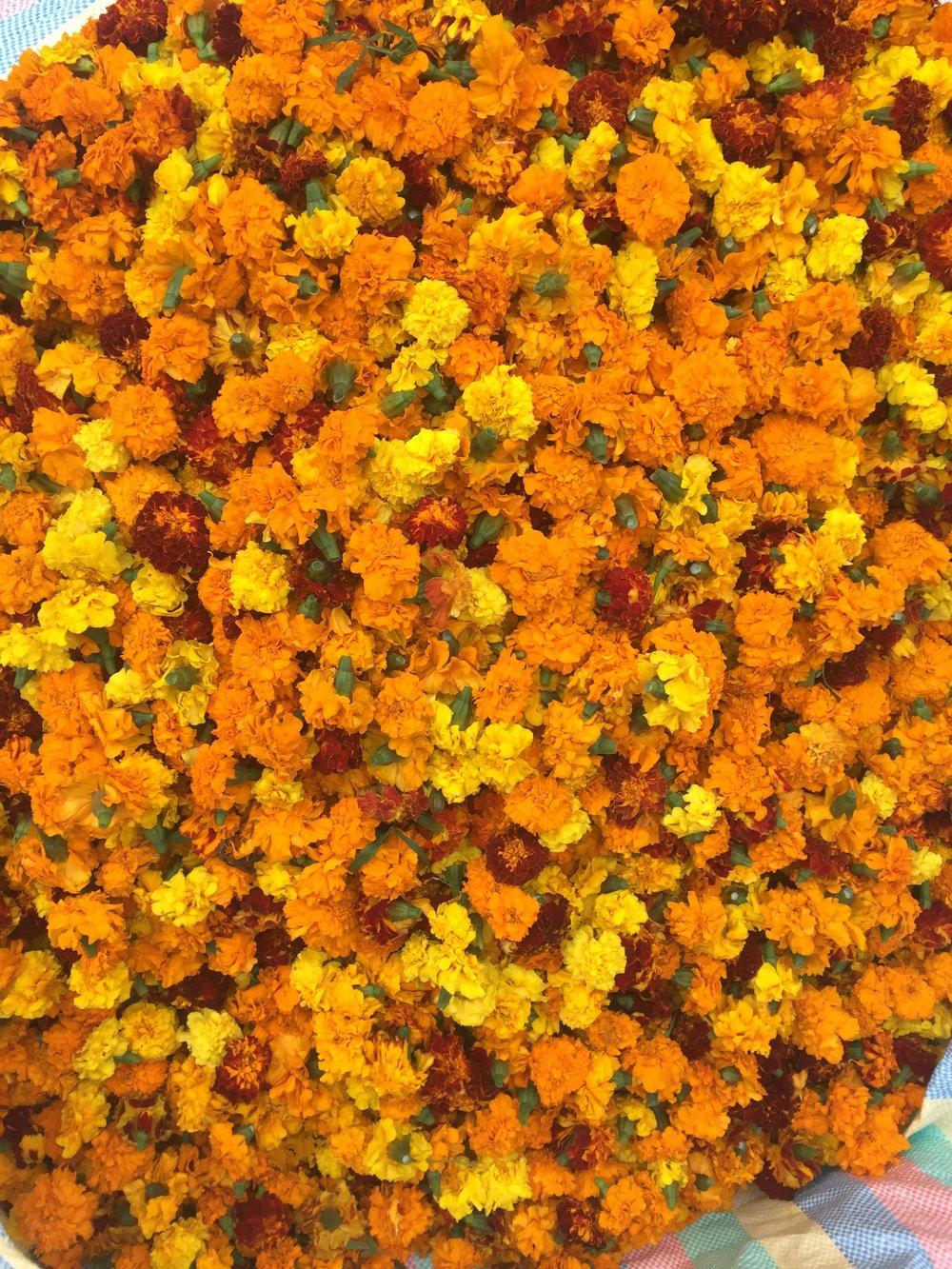 Cascade d'oeillets - Marché aux fleurs Chhatarpur