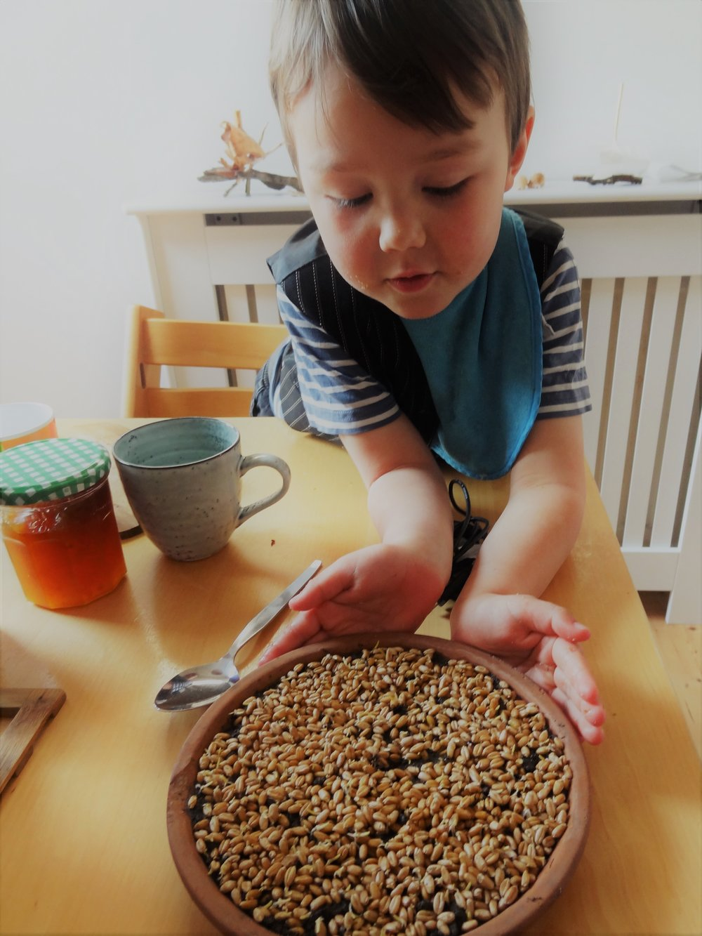 Sprinkle the wheat grass seeds evenly over the compost