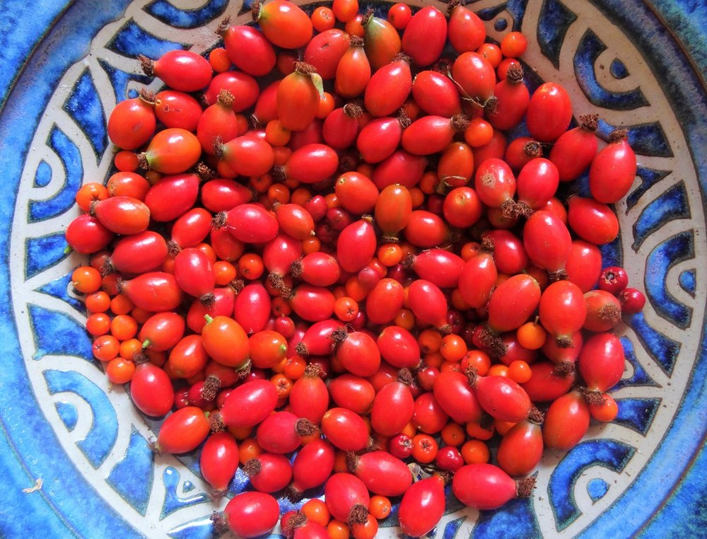 Our bowl of rosehips, hawthorn and rowan berries