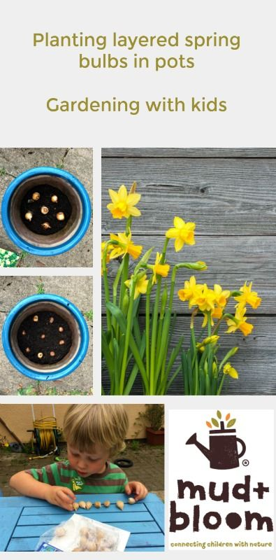 Planting spring bulbs in layers