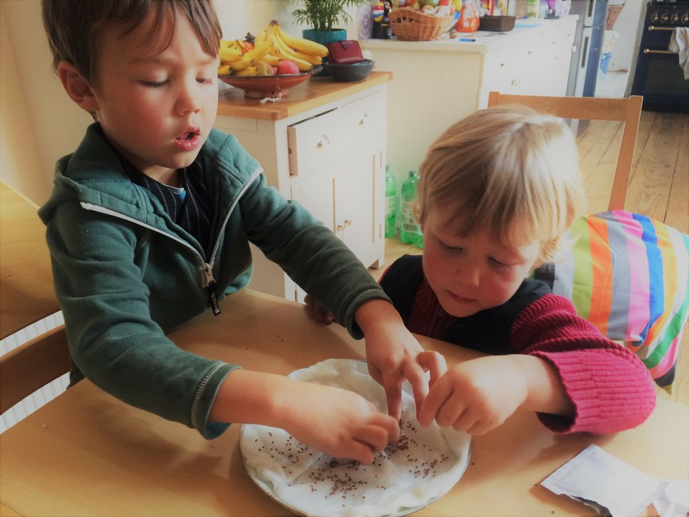 growing cress with kids