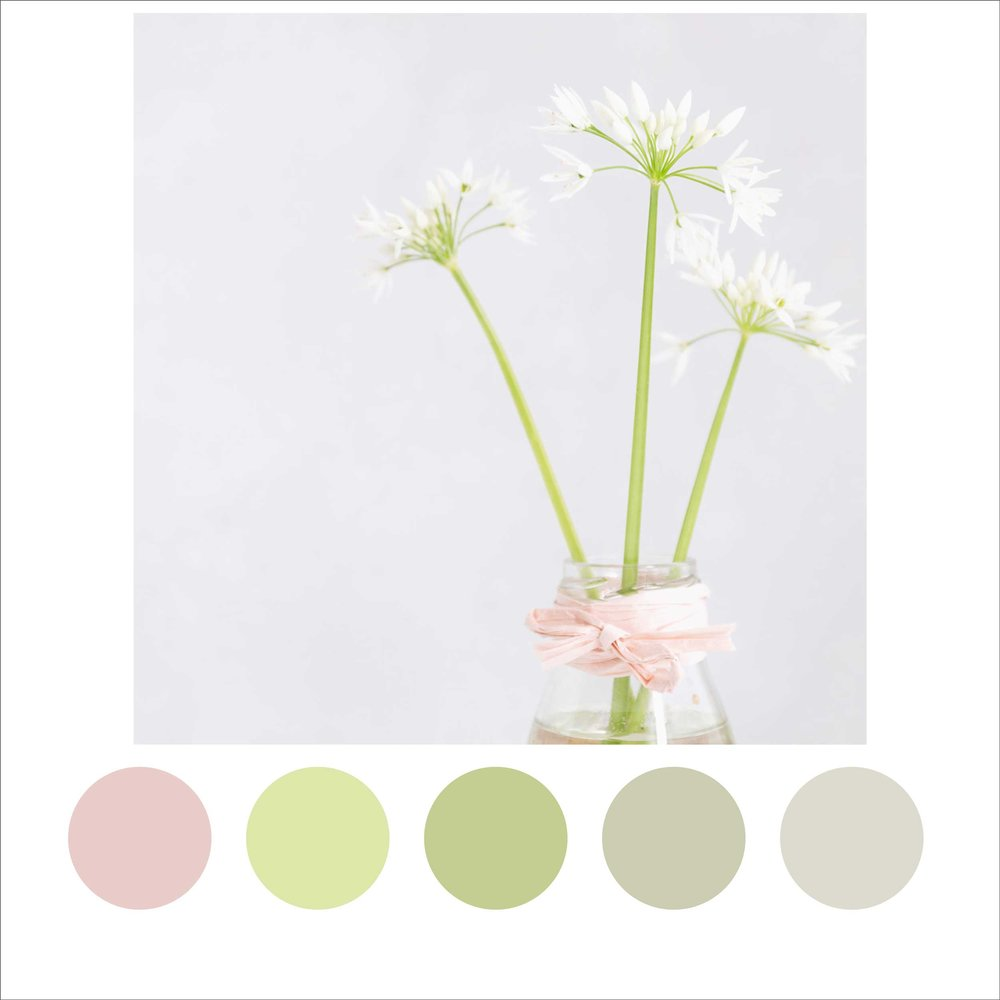 Wild_Garlic_Colour_Palette