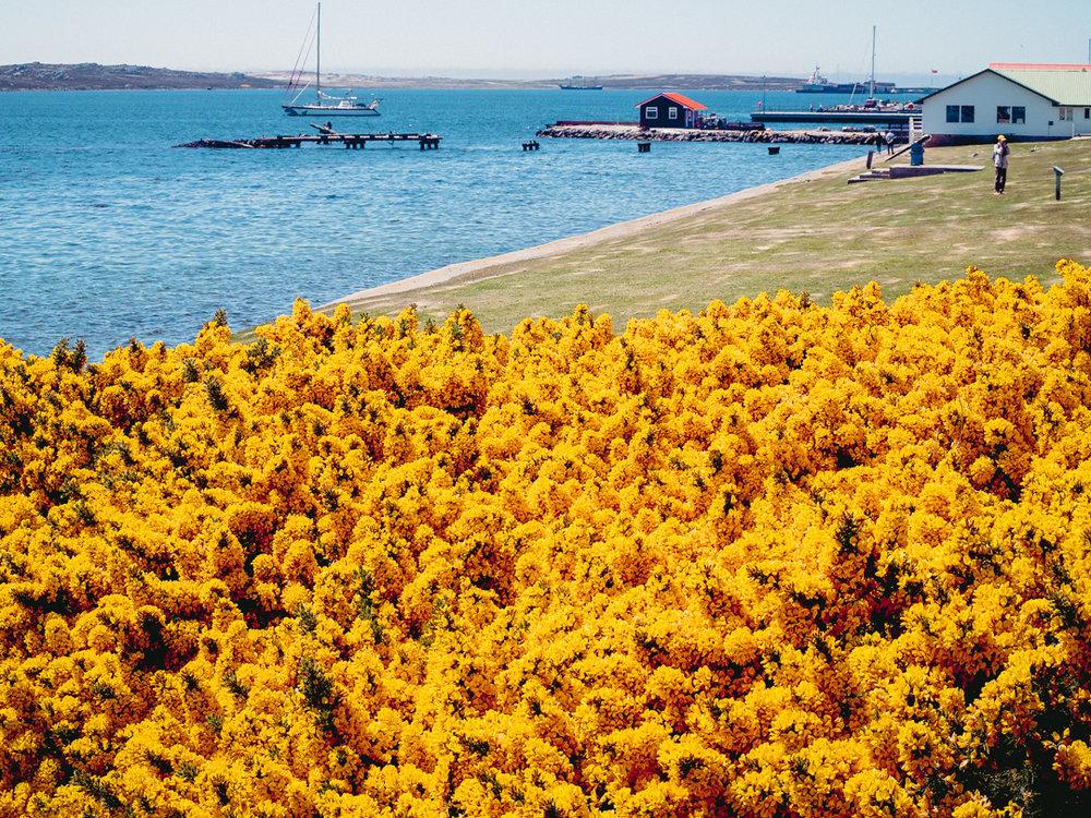 LH_Falklands2500-280661.jpg