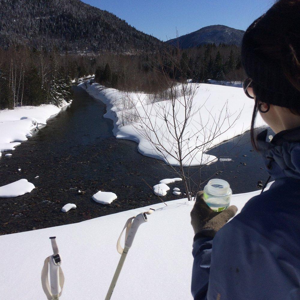 VALLÉE DES PINS BLANCS   Sentier de ski de fond et de raquettes