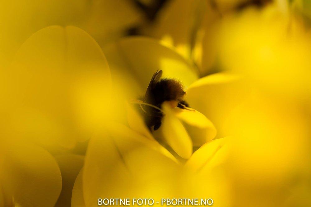 nyegolfsko-bortnefoto-jpg-jpg (1).jpg