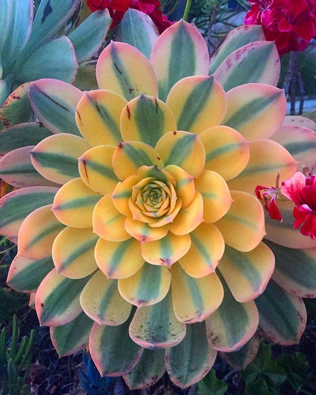 #succulents #math