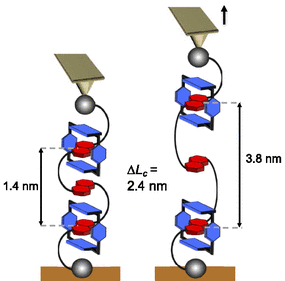 synthetic oligorotaxanes force spectroscopy.png