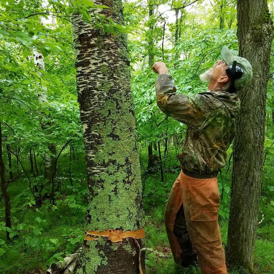 birch moss.jpg