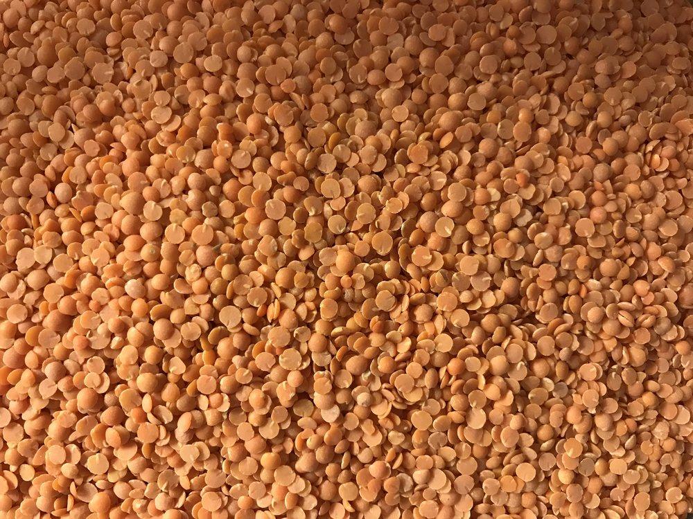 bulk (2).JPG