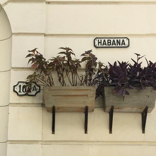 Exotic Havana
